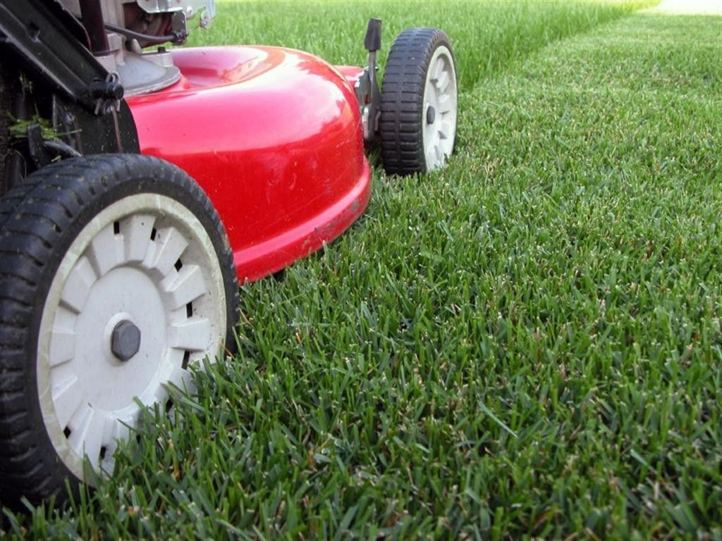 Local Lawn Care Services
