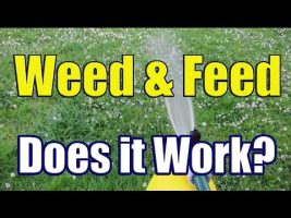 Weed and Feed Lawns McKinney, TX